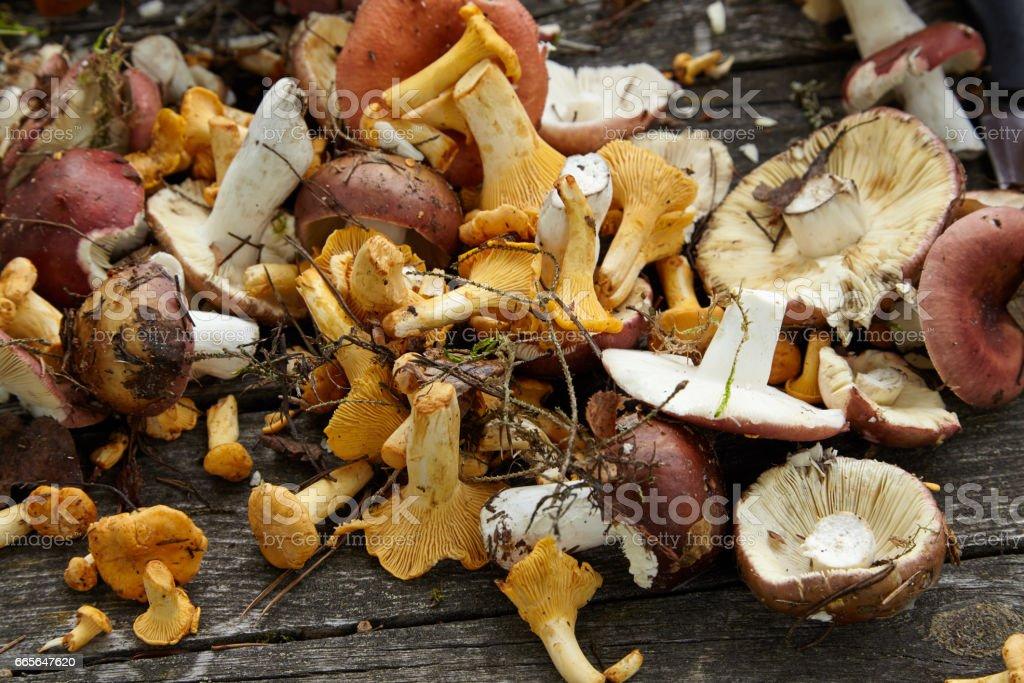 Gepflückten Pfifferlingen auf dem Holztisch – Foto