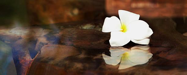 Ausgewählte Blume von Pulmeria Frangipani auf Glastisch – Foto