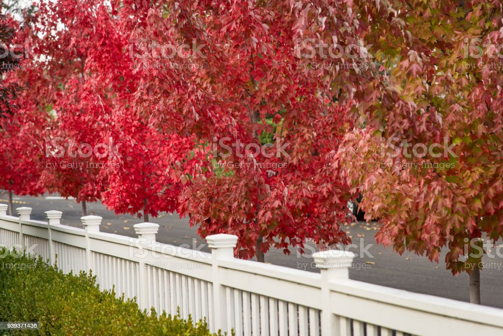 Picket fence and Autumn trees stock photo