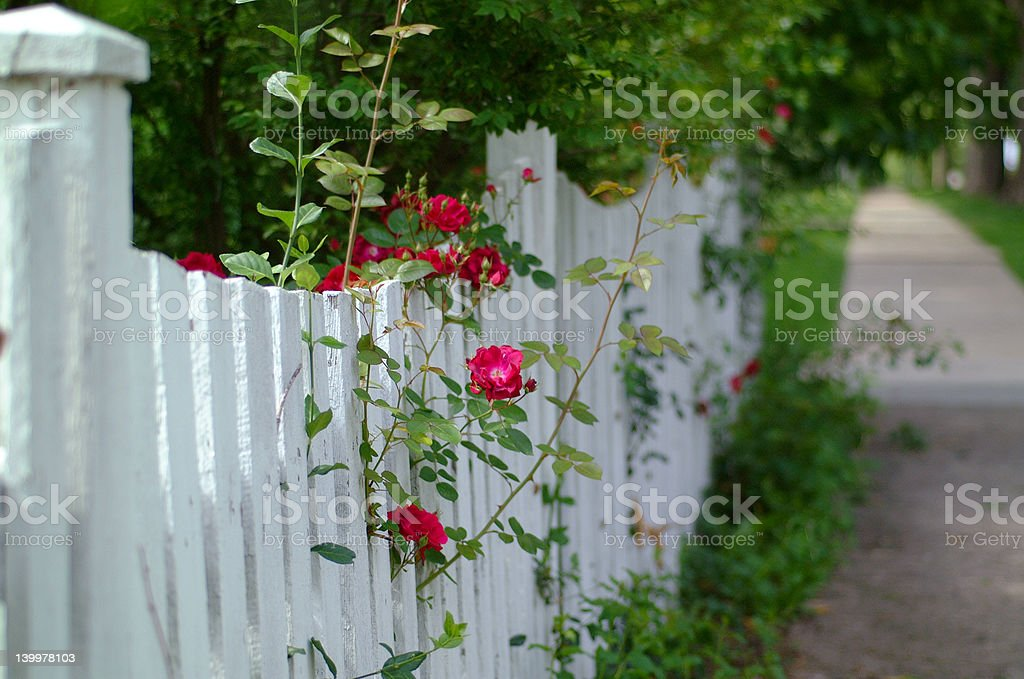 Picket Fence with Roses Horizontal royalty-free stock photo