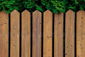 The wooden picket fence is removed against green arborvitae in a garden