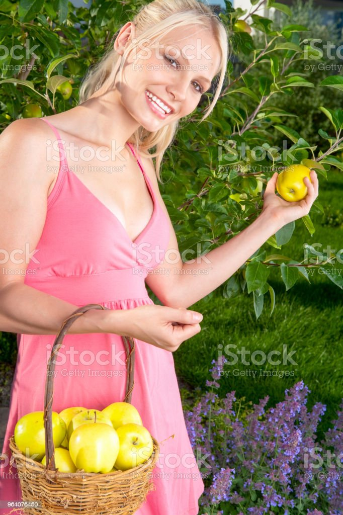 Picking apple in garden - Royalty-free 20-24 Years Stock Photo