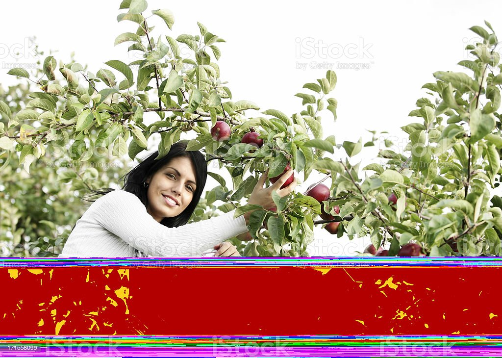 Picking apples stock photo