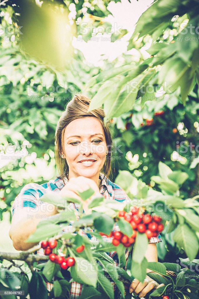 Picking Cherries stock photo