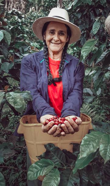 picking coffee in colombia - coffee farmer foto e immagini stock