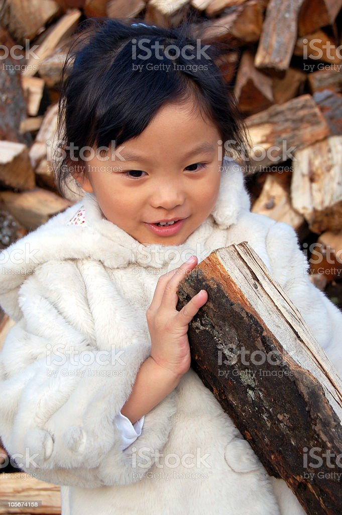 Picking firewood for the winter royalty-free stock photo