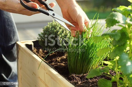 parsley, sage, thyme, mint and chives grow in a wooden self built raised bed on a terrace