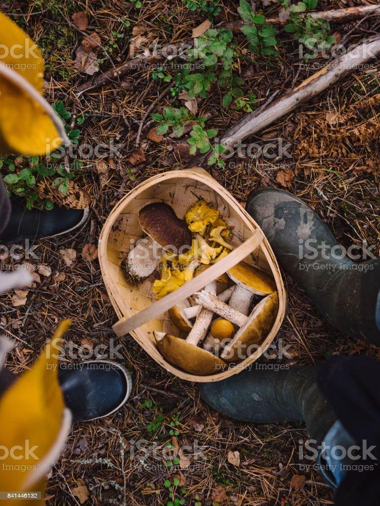 Retiro hongos en el bosque - foto de stock