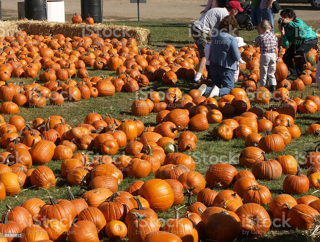 Picking Pumpkins royalty-free stock photo