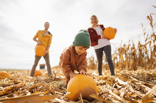 Photo of a young family picking pumpkins on a lovely pumpkin patch; family on a Halloween pumpkin patch adventure; fall family activities.