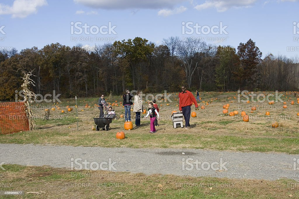 Picking pumpkins with Mom and Dad royalty-free stock photo
