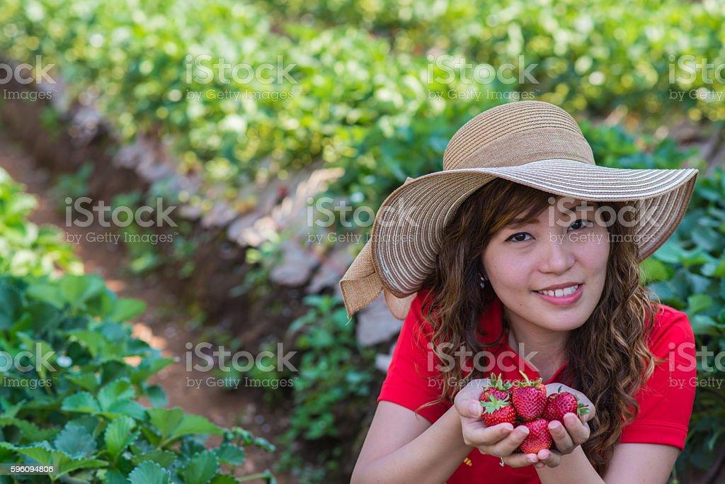 Picking strawberry royalty-free stock photo