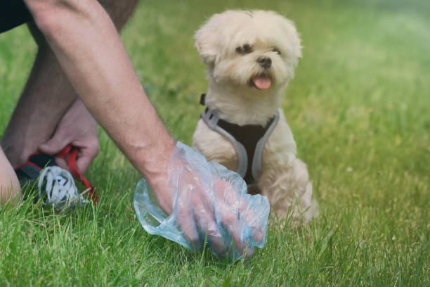 Hundeschaufel abholen – Foto