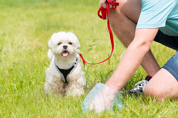 Picking up dog poop Owner cleaning up after the dog with plastic bag poop stock pictures, royalty-free photos & images