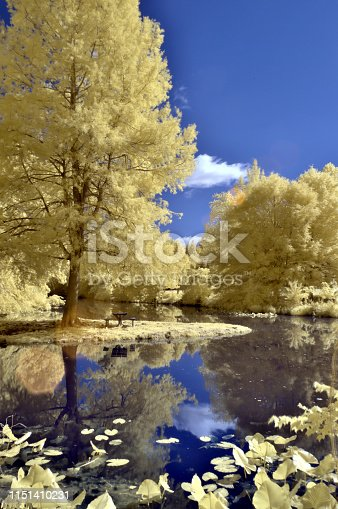 Shot using infrared, a bright colorful scene of a picnic area on a small island in the Pemberton Historic Park pond