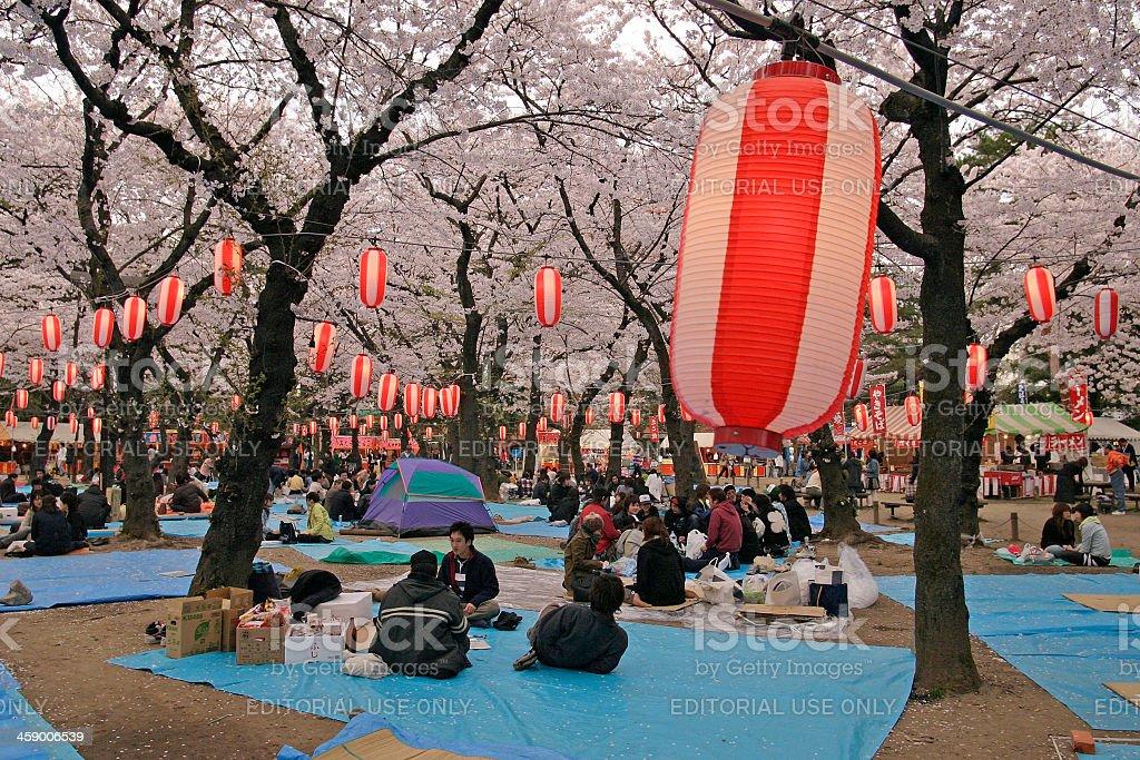 Picnic at cherry blossom festival royalty-free stock photo