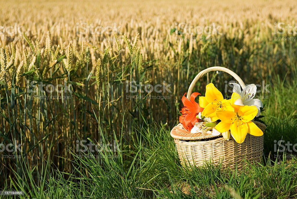Picnic basket with bunch of flowers royalty-free stock photo