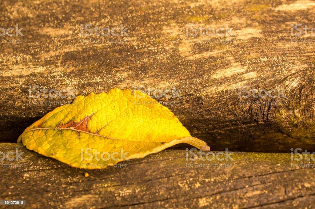 Picnic Bench Closeup royalty-free stock photo