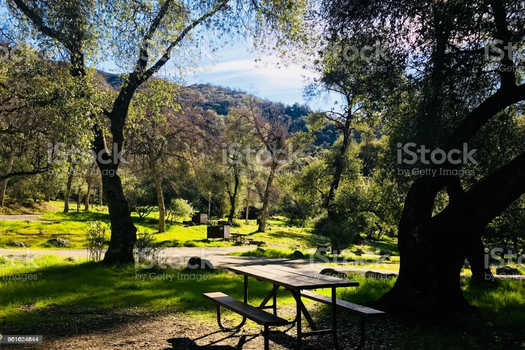 Picnic in Sequoia stock photo