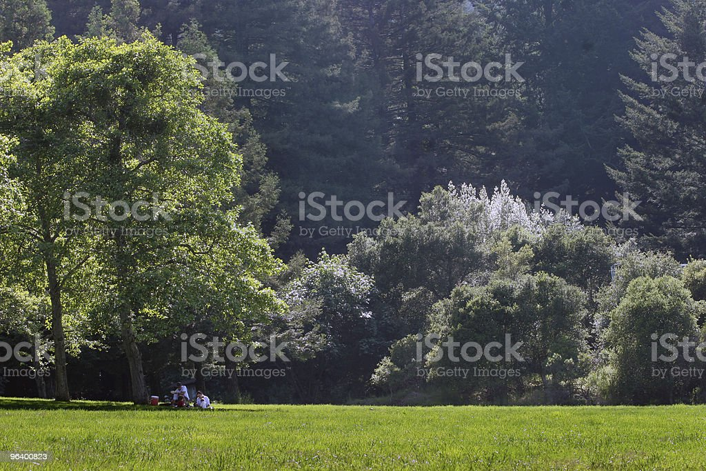 Picnic in the park - Royalty-free Agricultural Field Stock Photo