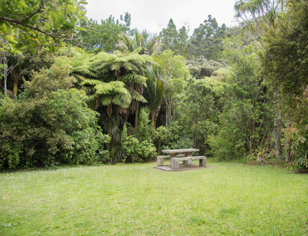picnic in the rainforest - nature reserve stock photos and pictures