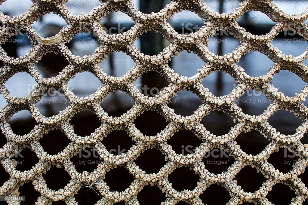 Picture Concept And Idea Of The Trypophobia Stock Photo Download