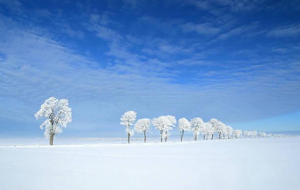Gefrorene Bäume – Foto