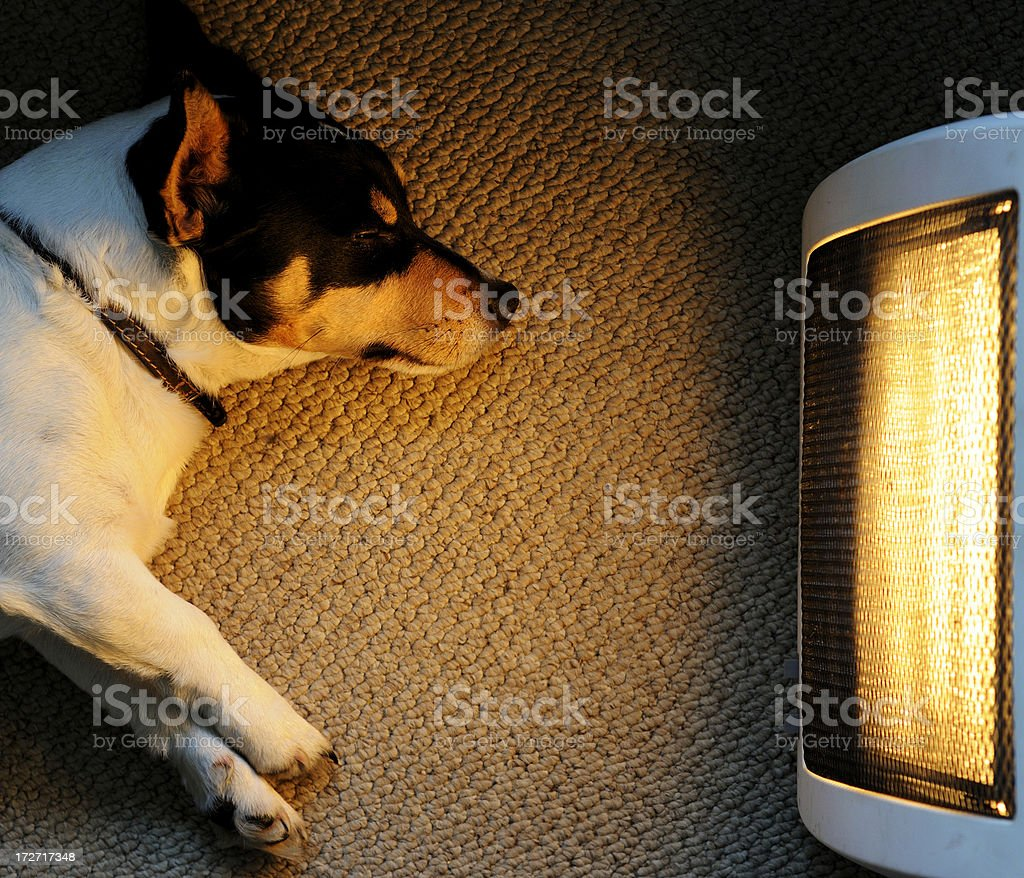 A picture of a dog sitting in front of a heater stock photo