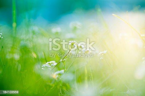 Beautiful green field with wildflowers.