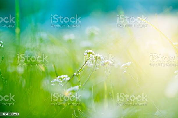 Photo of A picture of a field with sunlight