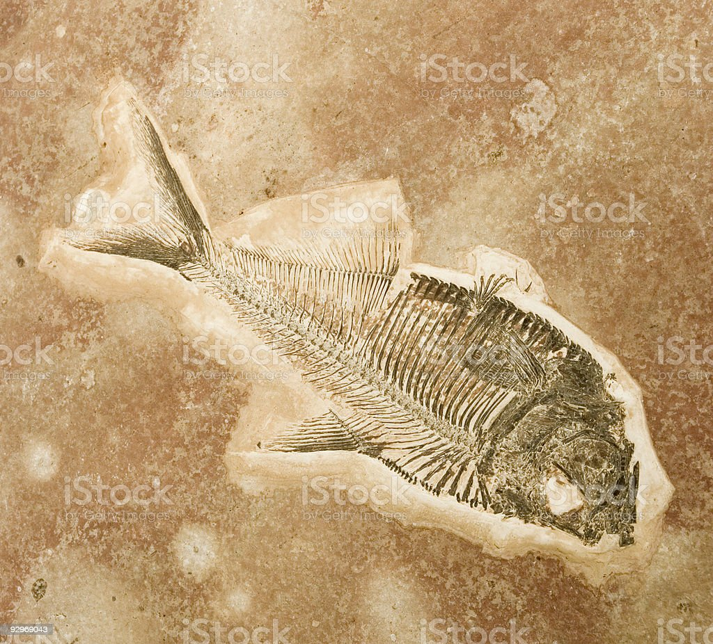 A picture of a fish fossil in sand stock photo