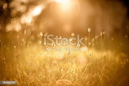 istock A picture of a golden field filled with sunlight 184863307