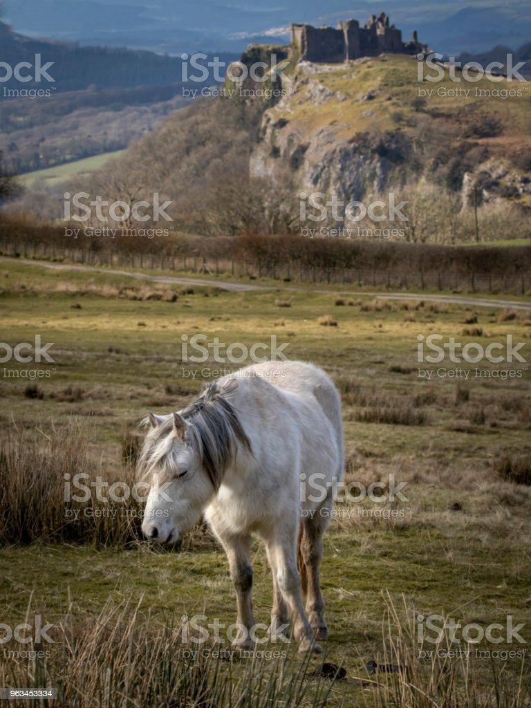 çok güzel manzaralı bir alanda bir at resmi - Royalty-free At - Atgiller Stok görsel