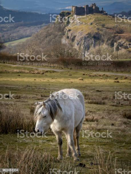Çok Güzel Manzaralı Bir Alanda Bir At Resmi Stok Fotoğraflar & At - Atgiller'nin Daha Fazla Resimleri