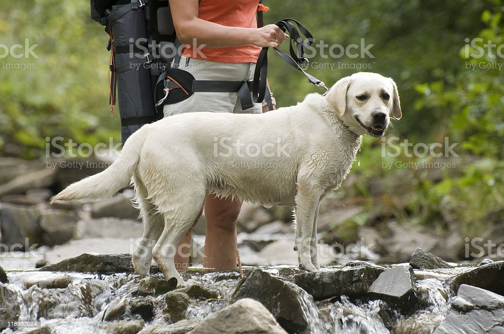 A picture of a lady on a hike with her dog royalty-free stock photo