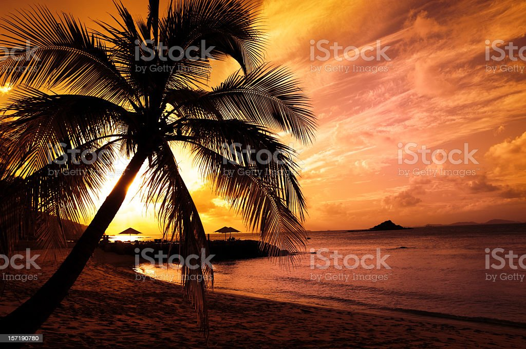 Picture of a palm tree on the beach at sunset royalty-free stock photo