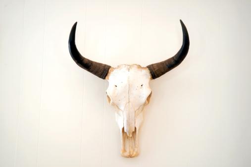 Steer skull mounted on wall.
