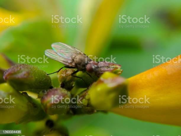 Picture of bee picture id1263334435?b=1&k=6&m=1263334435&s=612x612&h=ljxkc5e7xmp vhg6lnlenvadlcjhdhc lkcotnmmzeu=