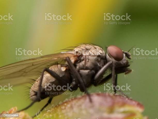 Picture of bee picture id1263334964?b=1&k=6&m=1263334964&s=612x612&h=jrw4graj3yrvwkrc91adh7fmkes8kzp4df0ltxrwjbi=
