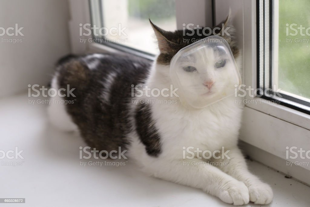 picture of cat with plastic container box on muzzle stock photo