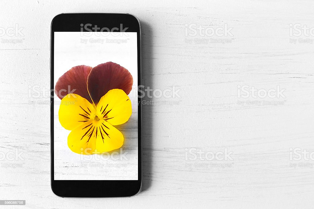 Picture of flower on smart phone royalty-free stock photo