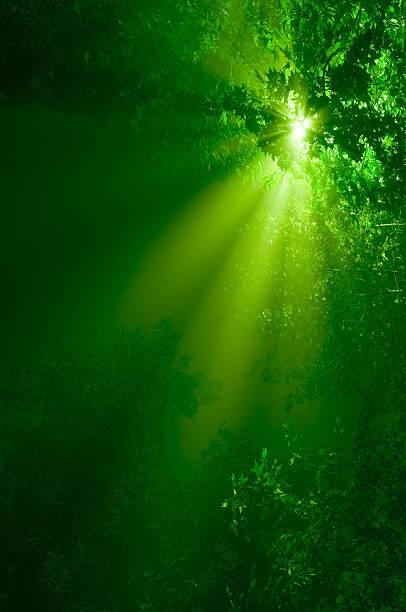に加わって魅惑的な森 - 木漏れ日 ストックフォトと画像