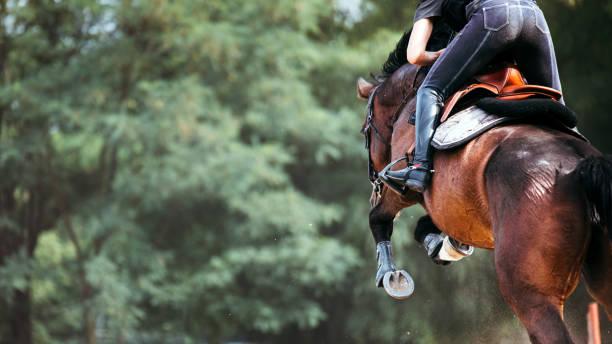 bild på hästhoppning körsituationer jockey - hästhoppning bildbanksfoton och bilder