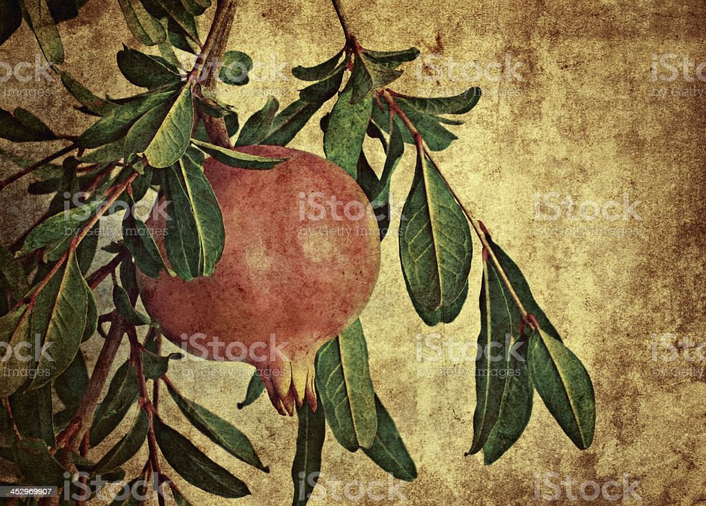 Picture of pomegranate stock photo