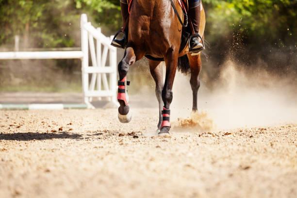 Bild von Rennpferd laufen auf Sand Rennstrecke – Foto