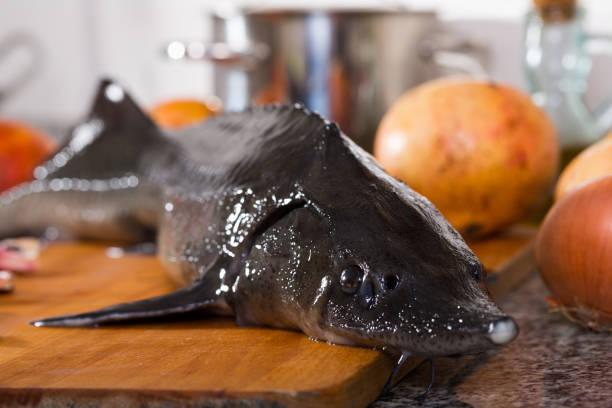 foto de esturión pescado crudo en el plato antes de preparar - pez sierra fotografías e imágenes de stock