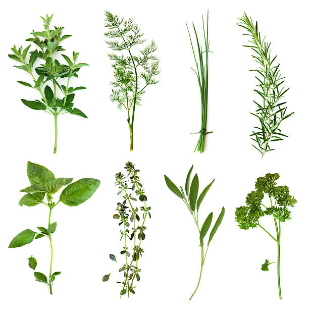 Picture of right different type of herbs Herbs collection, isolated on white.  Includes oregano, dill, chives, rosemary, basil, thyme, sage and curly parsley.  More herbs and spices:   http://robynm.smugmug.com/photos/265712091_f6Mdn-L.jpg dill stock pictures, royalty-free photos & images