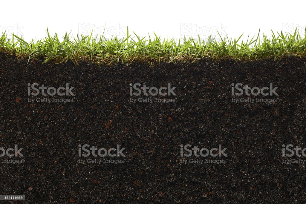 A picture of the inside of a patch of grass stock photo