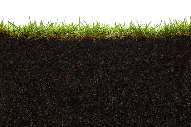 a picture of the inside of a patch of grass - tvärsnitt bildbanksfoton och bilder