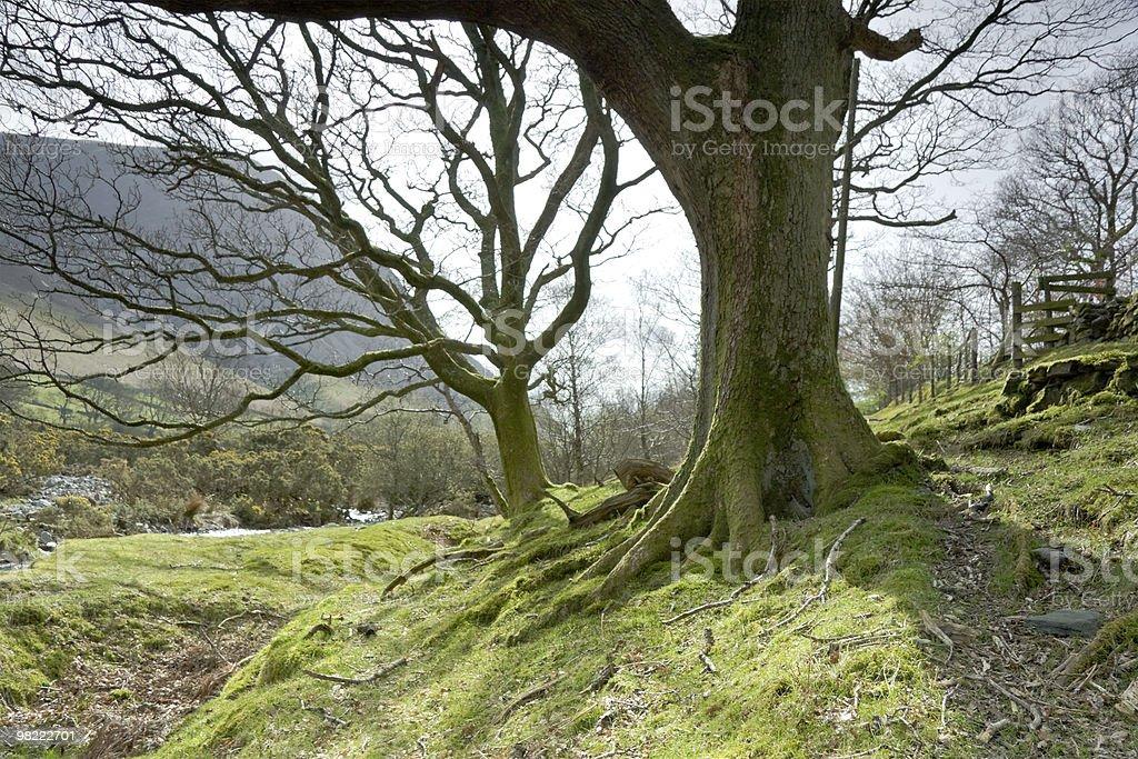 사진 Lanthwaite 풍경, Grasmoor 및 whiteside 백그라운드에서 royalty-free 스톡 사진
